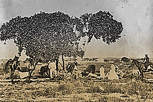 family and horses under 	  Investigator Tree in 1800s